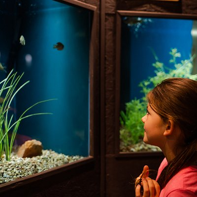 The aquarium has over 90 species of fish, mostly  native to Oklahoma.