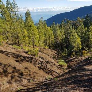 Ruta de senderismo guiada en el valle norte de Tenerife. Www.naturaxtremetenerife.com