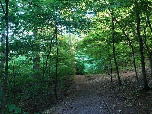 Sunnyhurst Wood in June