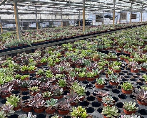 Florida Cactus Greenhouses