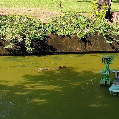 ภาพถ่ายในสวนพฤกษชาติ คลองจั่นเวลาเช้า เหมาะสำหรับทุกวัย