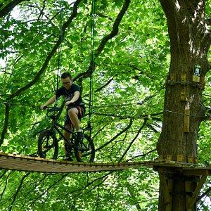 BMX dans les arbres