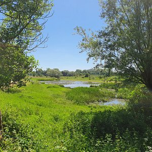 Pond near Reningsverksdammarna, Lund