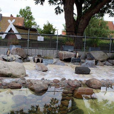 Kurpark  Pinguinanlage