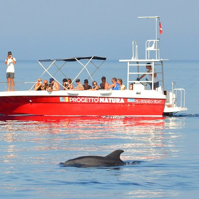 Following a bottlenose dolphins following the good code of conduct for responsible dolphin watching.