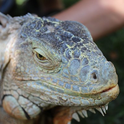 If you do a private tour you'll get to handle many of the reptiles.