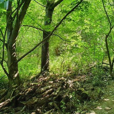 Gobions Wood