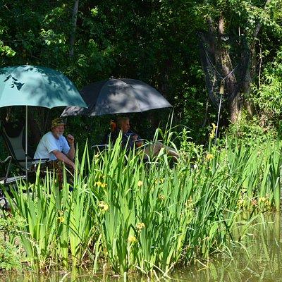 Gobions Pond at Gobions Wood