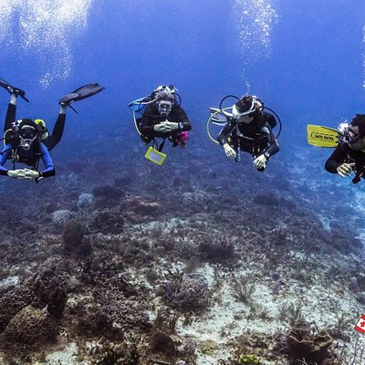 Maple Leaf Scuba's Instructors enjoying to be back in the water!!