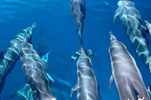 A holiday in the Maldives is not complete without a cruise alongside the majestic creatures that are dolphins. We think you should add this to your #BucketListMaldives right away! #TravelBucketList #Maldives
