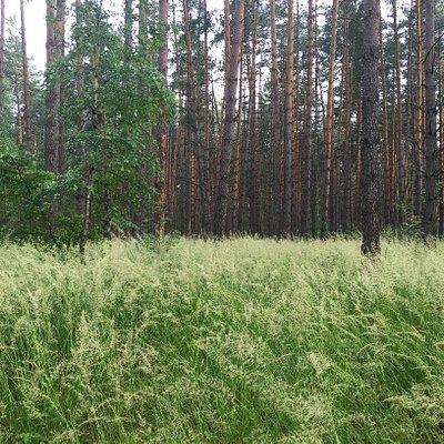 Paustovsky Trail