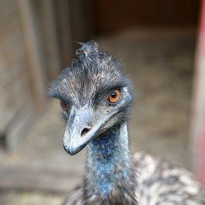 Snilsberg Familiepark - Skeptic Emu