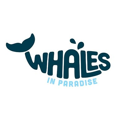 Whales In Paradise: Experience The Closest Whale Encounters