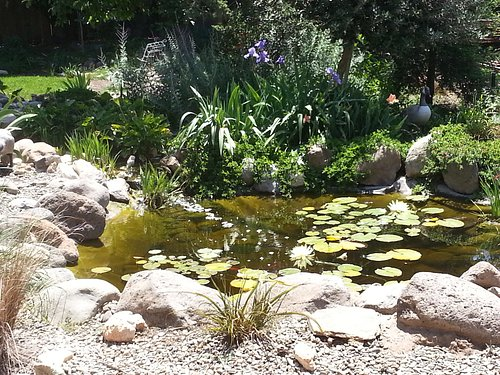 My pond at home.