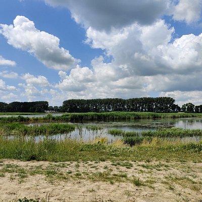 Biesbosch De Elzen