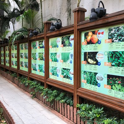 Queen Street Rest Garden - examples of plants used in Chinese herbal medicine