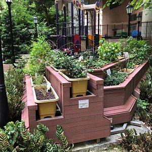 Queen Street Rest Garden (4)