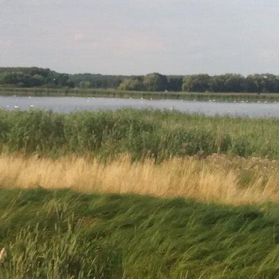 Rietzer See mit Wildvögel.