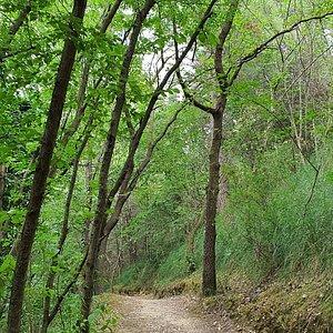 il bosco del cugnolo