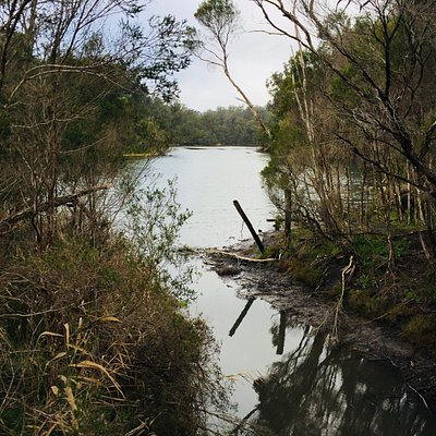 Nowa Nowa Wetlands