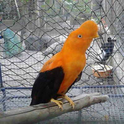 lindo zoológico para ver aves nacionales e internacionales.