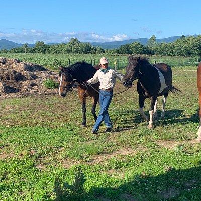 Niseko Country Farm - Horse Riding