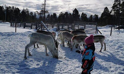 Our little reindeerherder