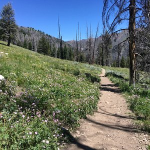 Gorgeous wildflowers along the trail during the summer