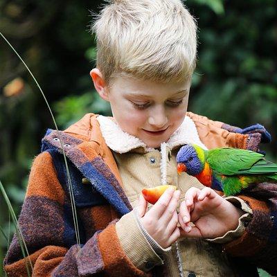 Friendly Staglands' rainbow lorikeet