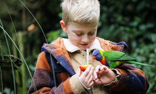 Friendly Staglands' rainbow lorikeet