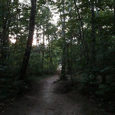 Lasek Bemowo wieczorową porą