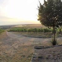 Blick von der Weinlage Greuther Bastel ins fränkische Weinland