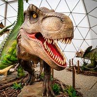 Najobľúbenejší, ale aj najnebezpečnejší T-rex!