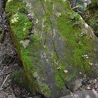 Big mossy boulder
