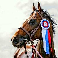 Лошади чемпионы Краснодарского ипподрома.