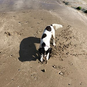 Pep loves his time on this gorgeous clean beach