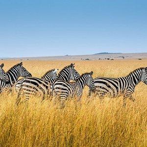 Explore  the Mara lands