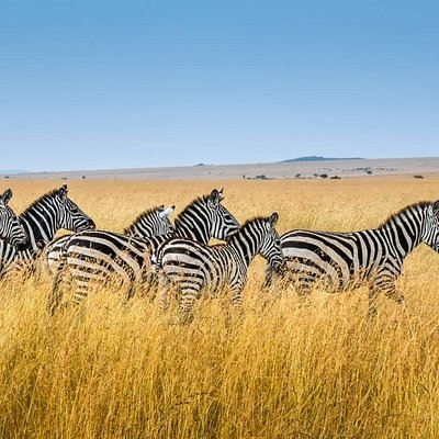 Explore  the Mara lands