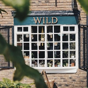 Outside at Wild - The Plant Shop