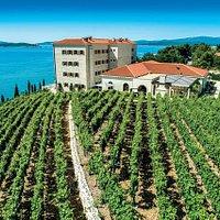 Villa Korta Katarina & Winery, Vineyards