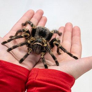 O każdej pełnej godzinie można potrzymać niegroźnego pająka na ręce!
