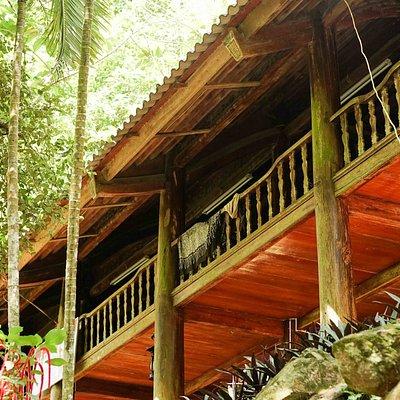 Samadhi Jungle, Ba Vi National Park, May 2020