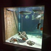 Aquarium Amazonie : 12 000 litres