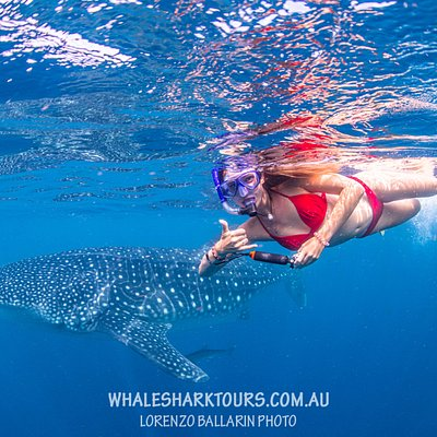 Your own personal paparazzi will be in the water to try capture a photo of you!
