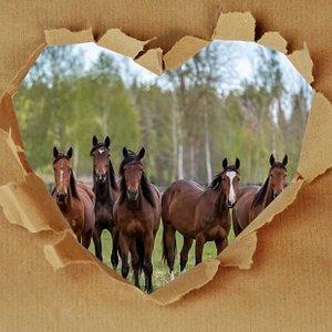 Hästar är onekligen magnifika djur.