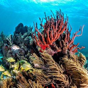 Enchanting Puerto Morelos reef