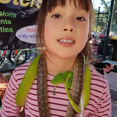 The green snakes at reptile party were out of this world, as were the patterned brown ones and the young crocodile.