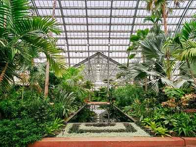 The Palm House. At 65 ft high and 90 ft wide, this is the largest room in the Conservatory. It is designed as an idealized tropical landscape, featuring more than 70 graceful palms, as well as other plants from warm habitats all around the world.