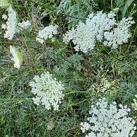 Wildflowers along trail