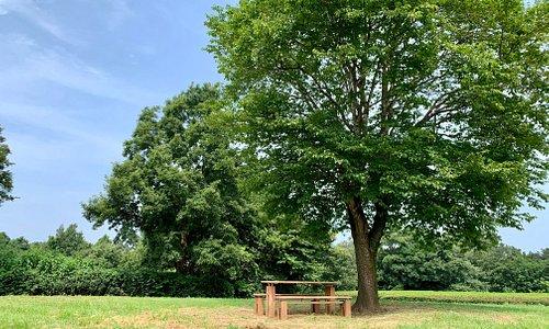 hiranooka bench